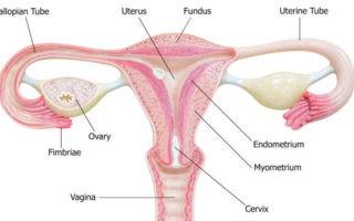 vaginal-atrophy-gsm-news-harley-street-emporium