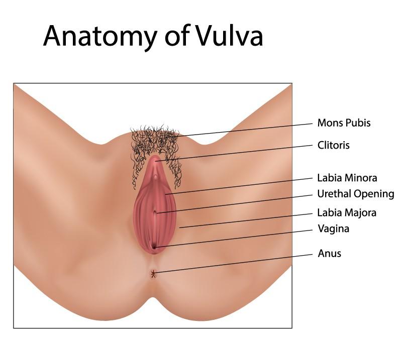 vagina-anatomy-halrey-street-emporium