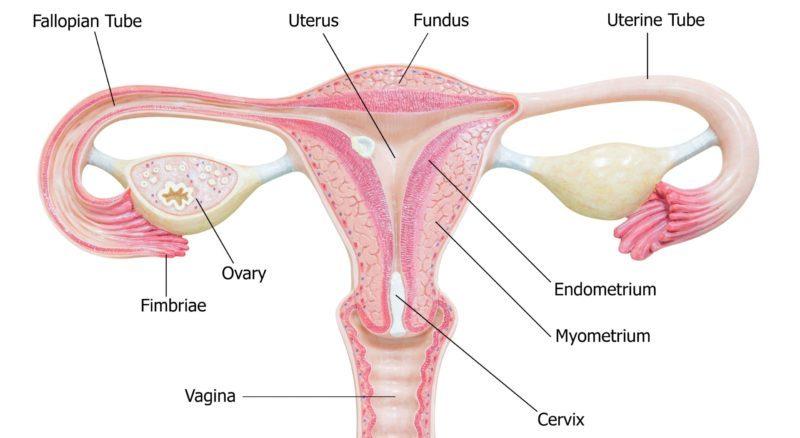 vagina-hrt-progesterone-harley-street-emporium
